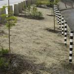 Зелени площи - Цариградско шосе (етап засаждане)