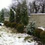 """Вилна зона """"Камбаните"""" - засаждане на едроразмерна растителност"""