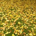 Моравата през есента